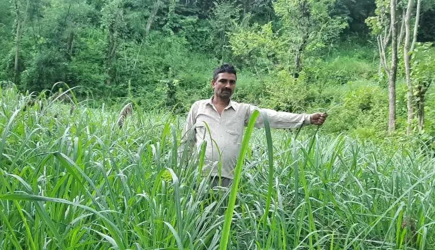 कांगड़ा के 10वीं पास ओम प्रकाश ने बंजर जमीन पर उगाया सोना